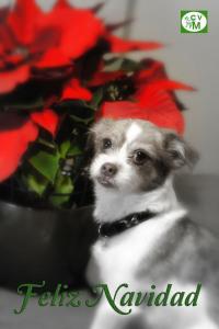 Christmas Maggie