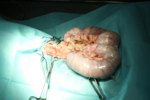Piómetra-endometritis.